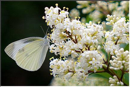 butterfly_060603.jpg