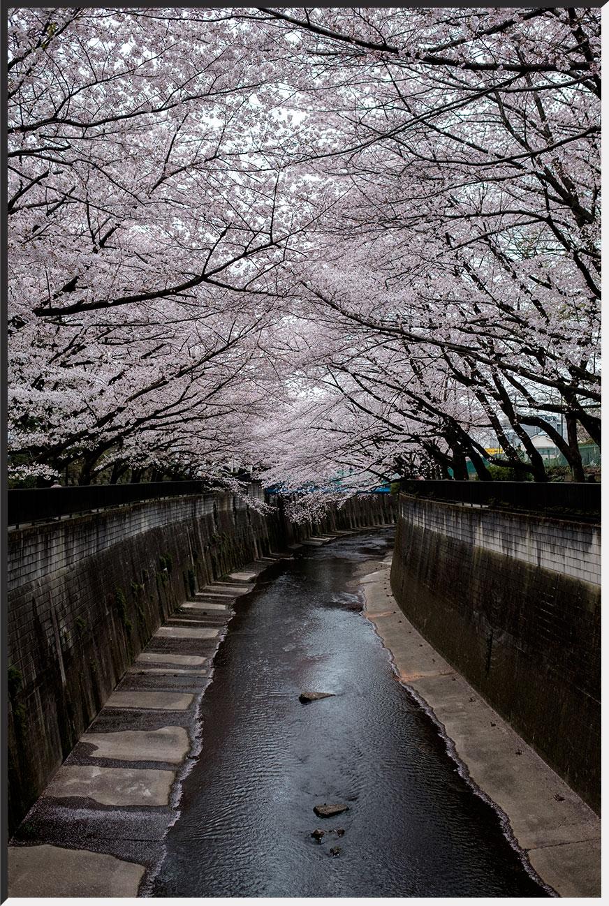 hanami_160402_01.jpg