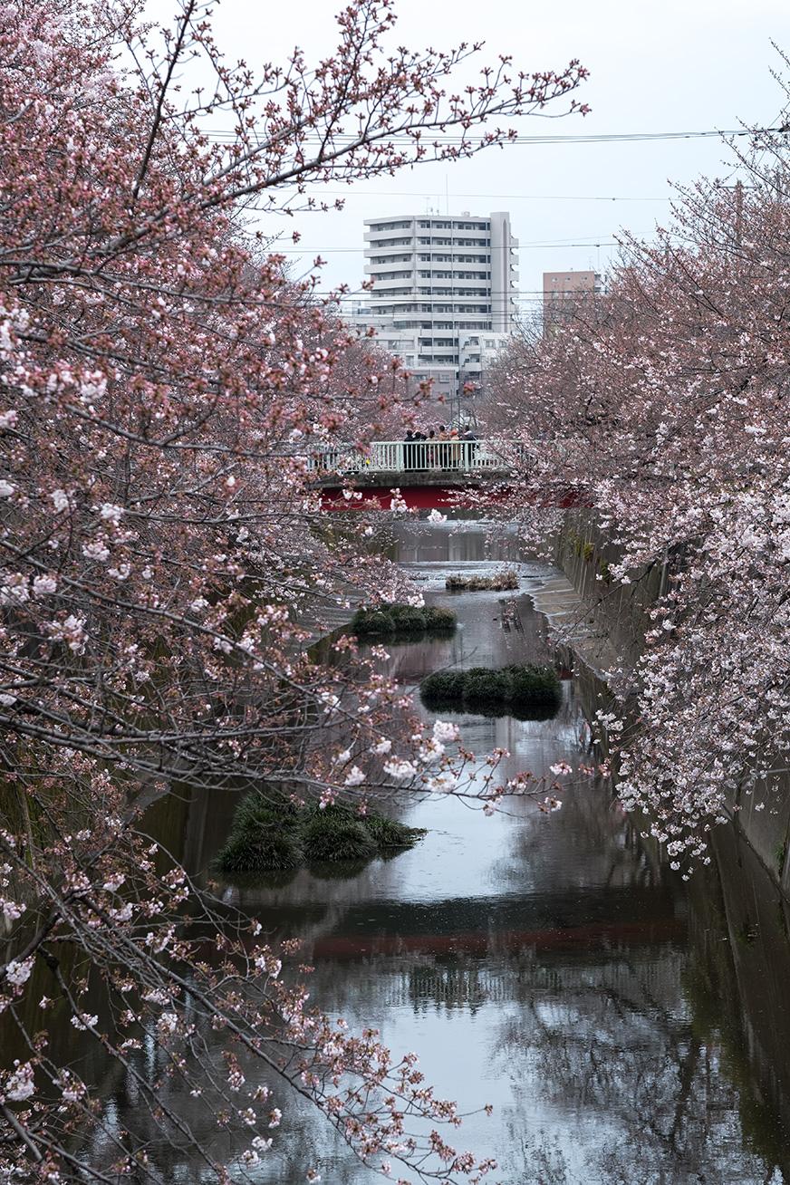 hanami_170401_03.jpg