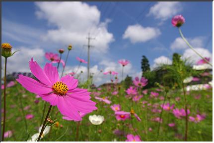 karuizawa_060817.jpg