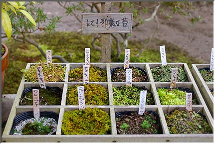 kyoto_ginkakuji_02.jpg