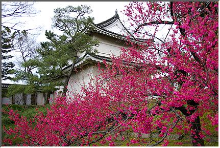 kyoto_nijoujou.jpg