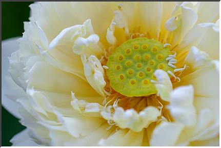 lotus_070816_04.jpg