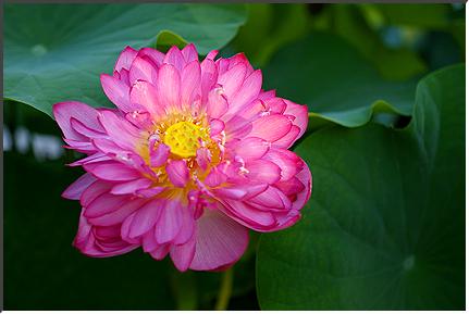 lotus_070816_06.jpg