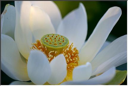 lotus_070816_08.jpg