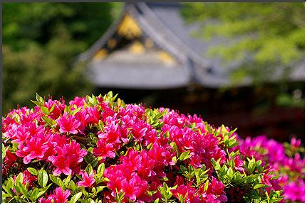 nezu_060430.jpg