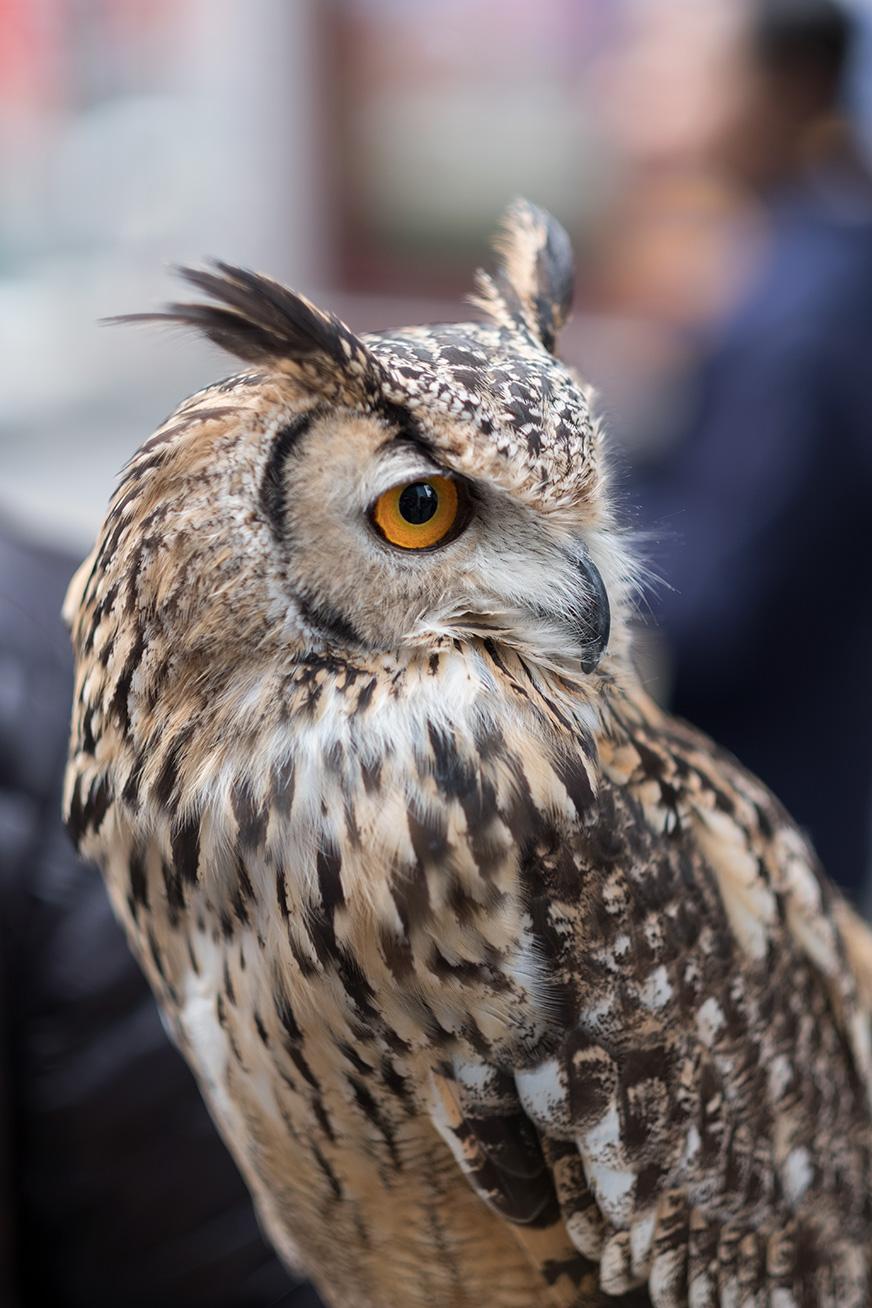 owl_170422_01.jpg