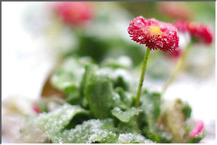 snow_in_tokyo_041229_02.jpg