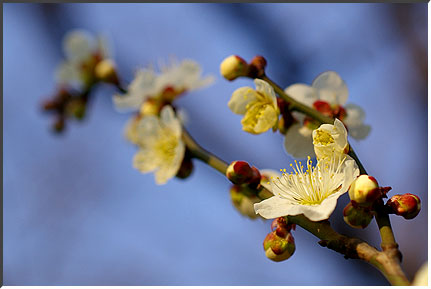 springhunting_03.jpg