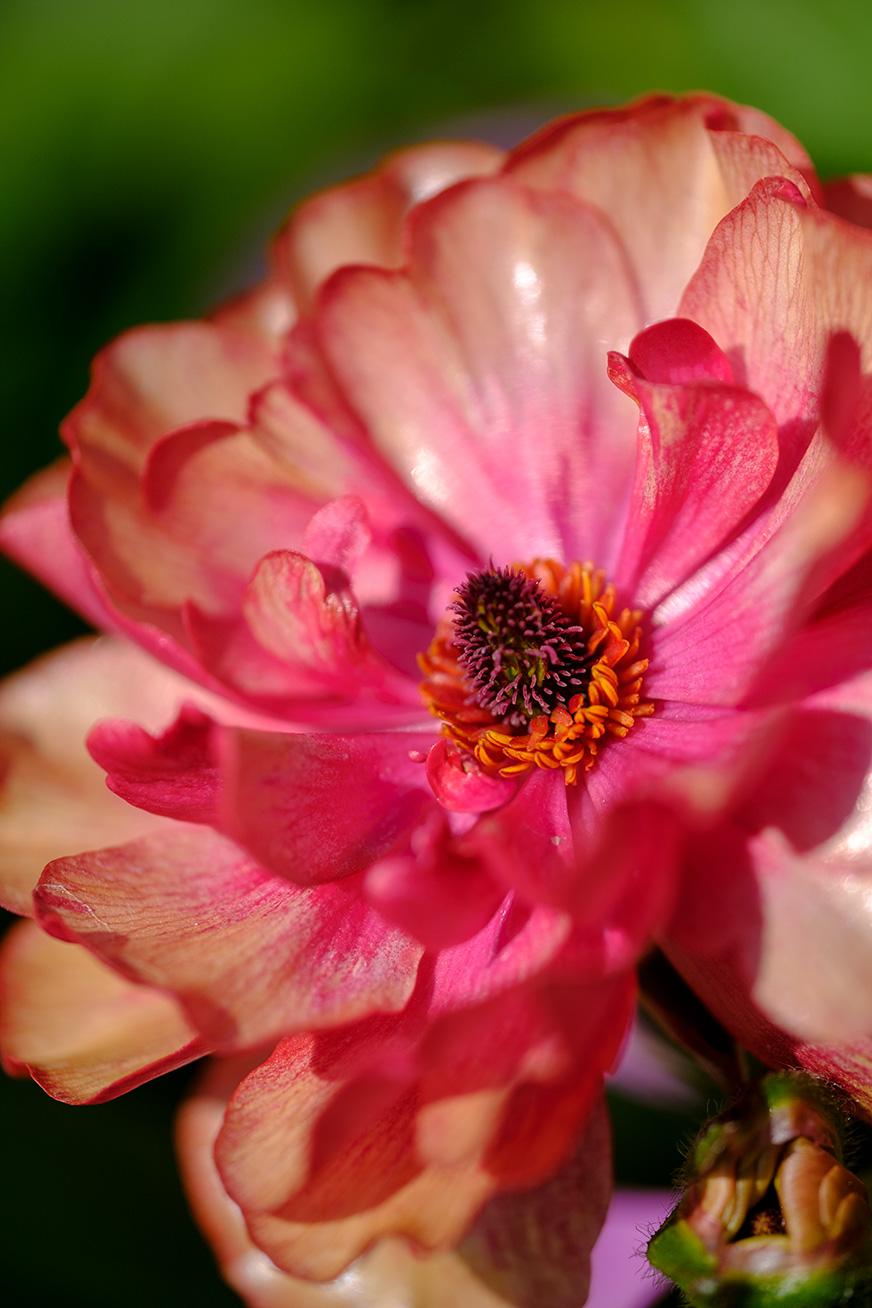 flower_180304_01.jpg