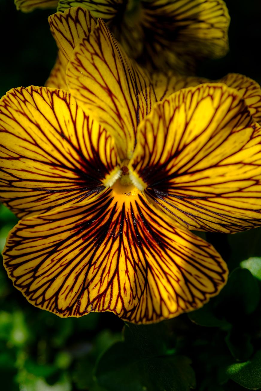 flower_180304_02.jpg
