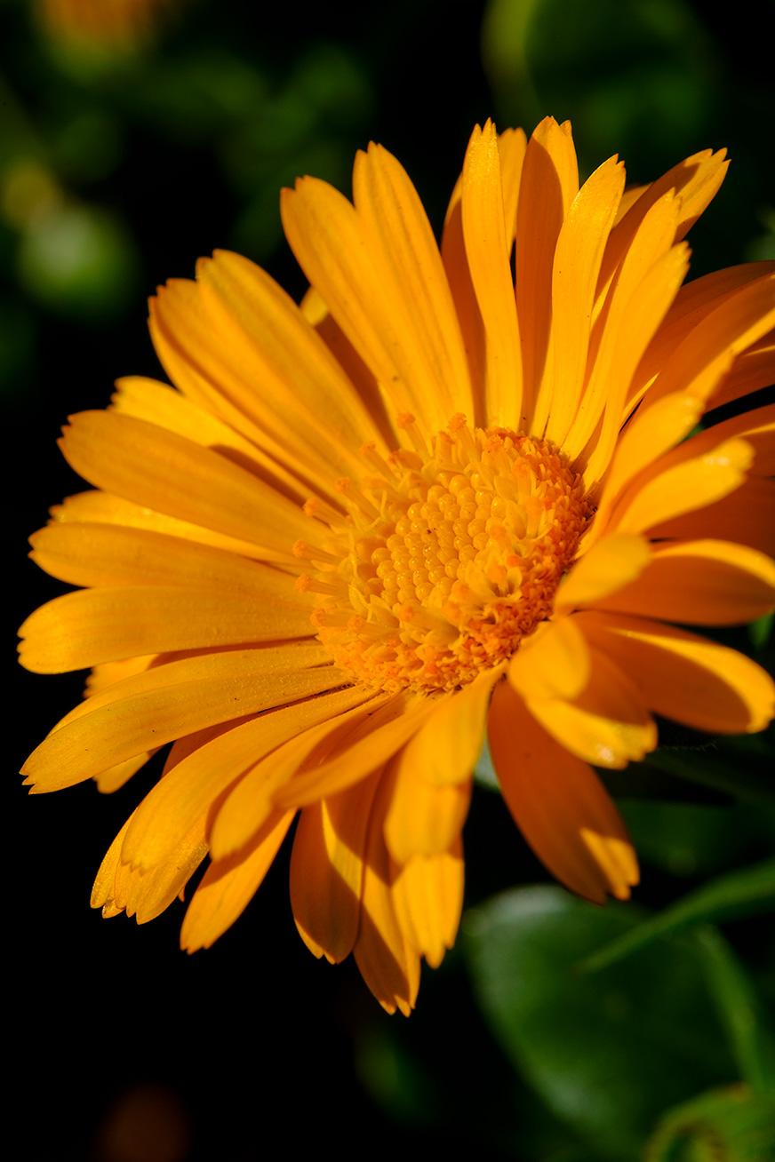 flower_180304_04.jpg