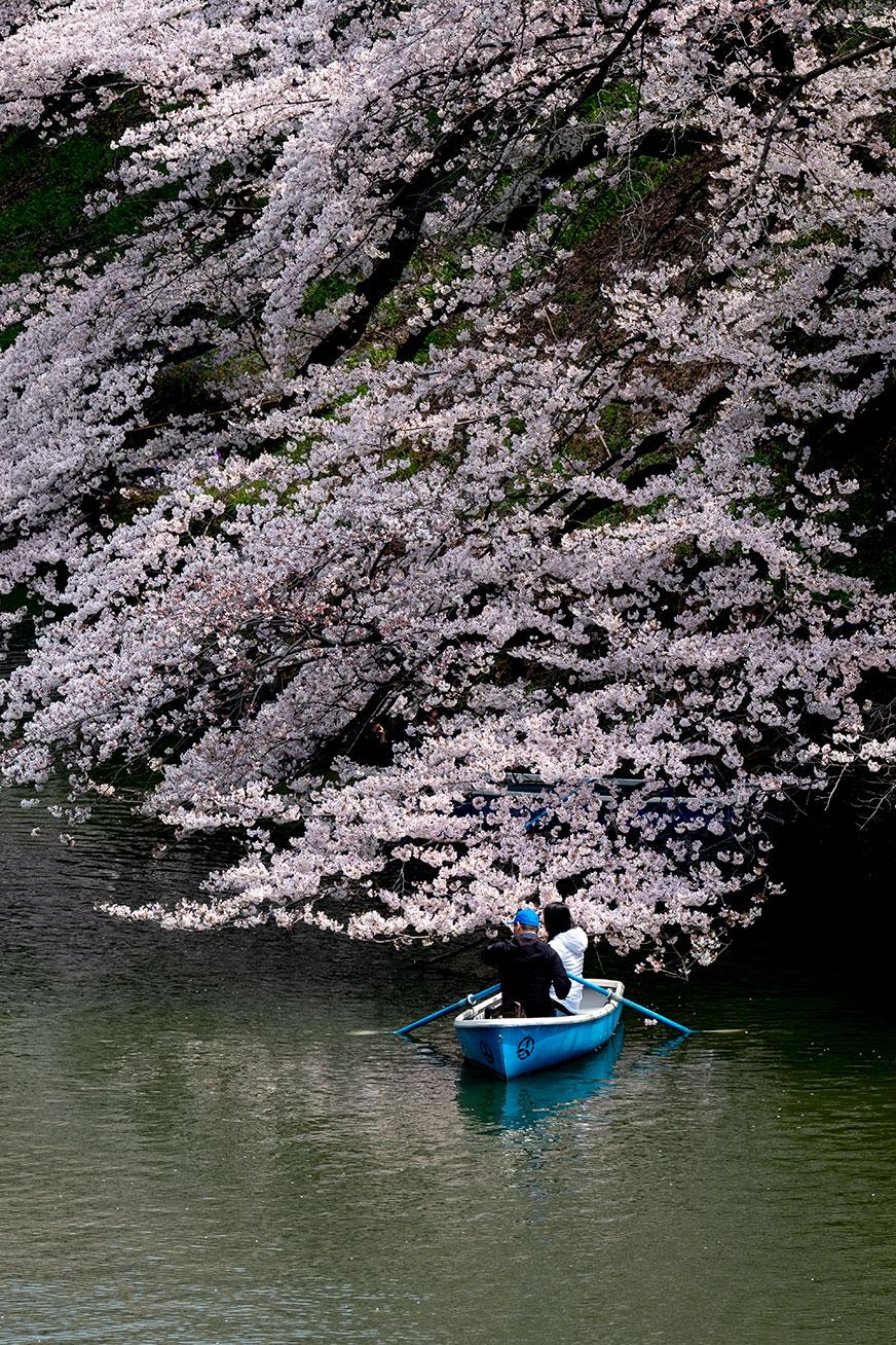 hanami_190331_01.jpg