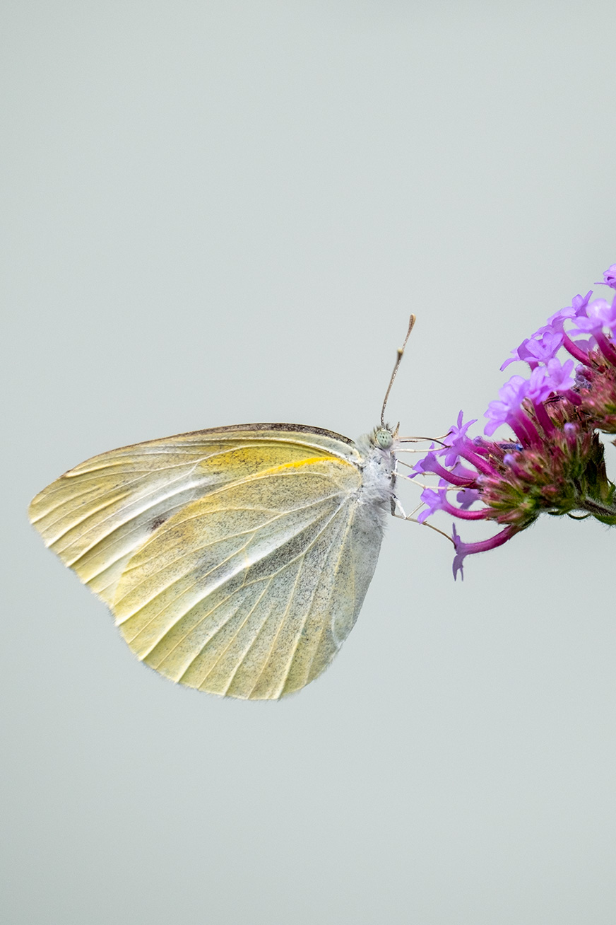 butterfly_200531_02.jpg