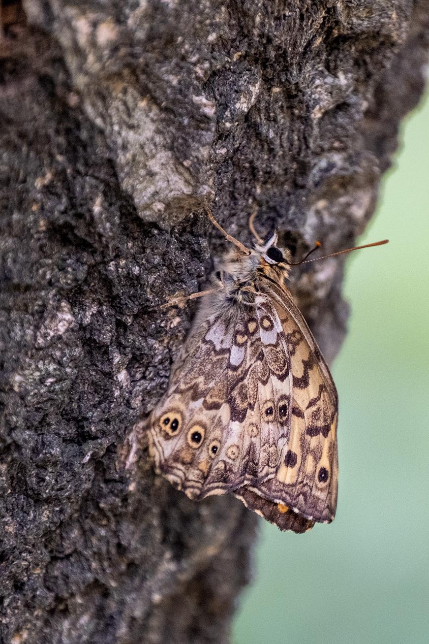 butterfly_200531_03.jpg